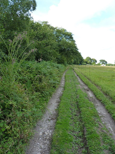 Track on Buckley Plain