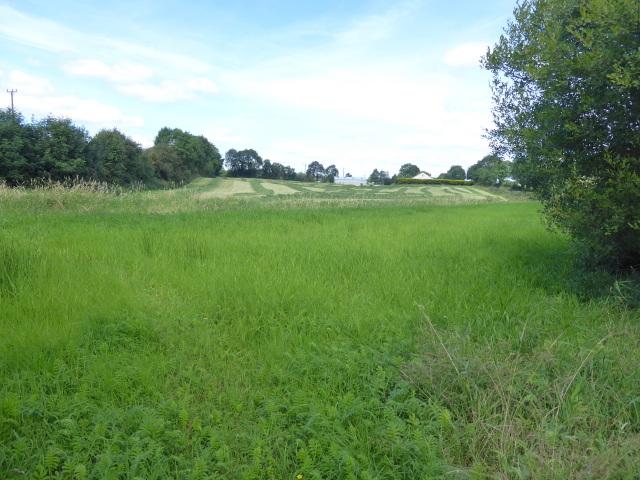 Grass field, Tattyreagh Glebe