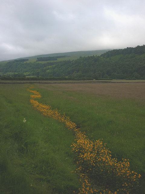 Pastureland by Buckden