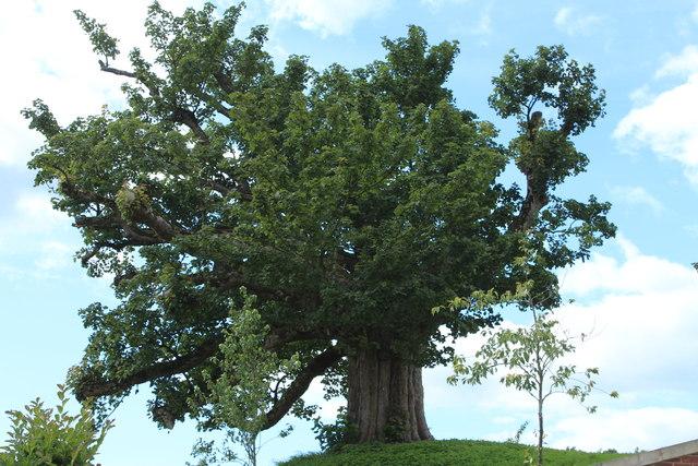 Ye Olde Tree, Dumfries House