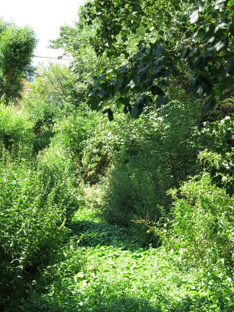 Culvert by Culvert Lane (2)