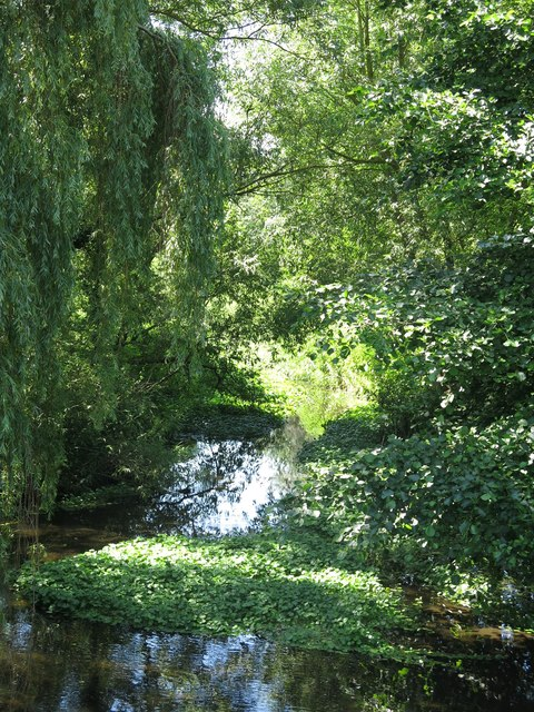 The River Colne downstream of Long Bridge (2)