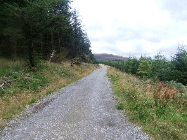 Forestry Track in Hobcarton Plantation