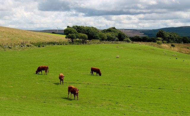 Mixed grazing at Roughdiamond