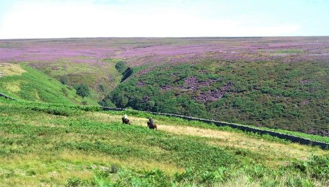 Riders on the moor