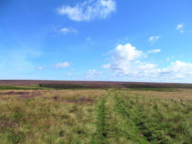 Track across the moor