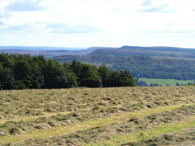 Recently mown grassland above Thorodale