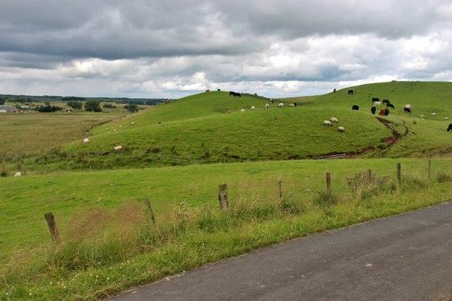 Grazing land at Avonside