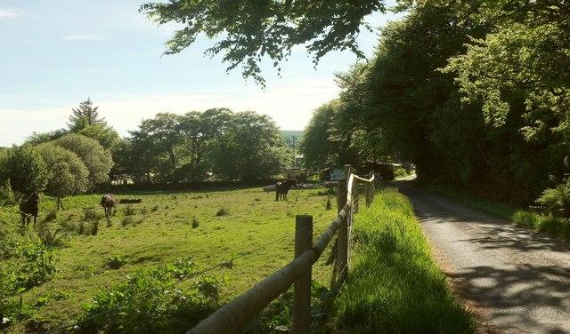 Grazing by the lane, Merripit