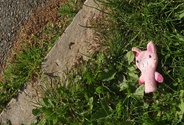 Soft toy, St Margaret's Avenue, Plainmoor