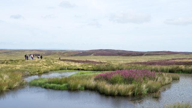 Pool with island on moorland