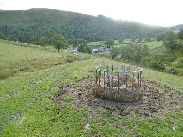Llanarmon Dyffryn Ceiriog, sheep feeder
