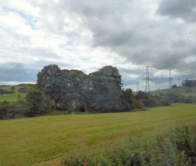 Copse near Dilhorne Park