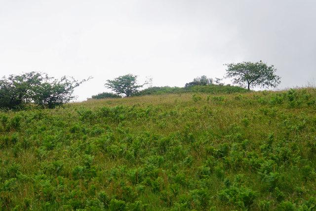 Tumulus on Lydeard Hill
