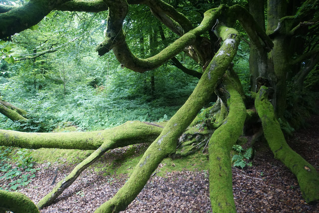 Rambling branches above Muchcare Wood