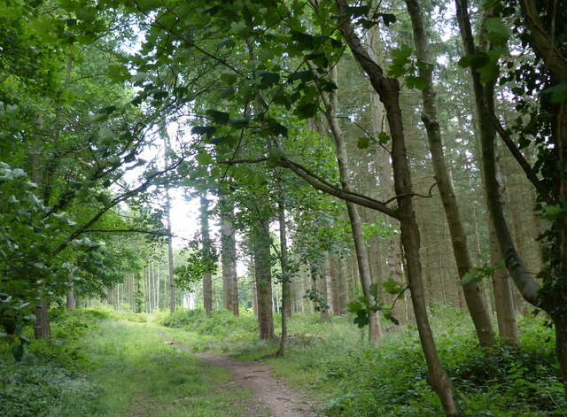 Path through Lane Plantation