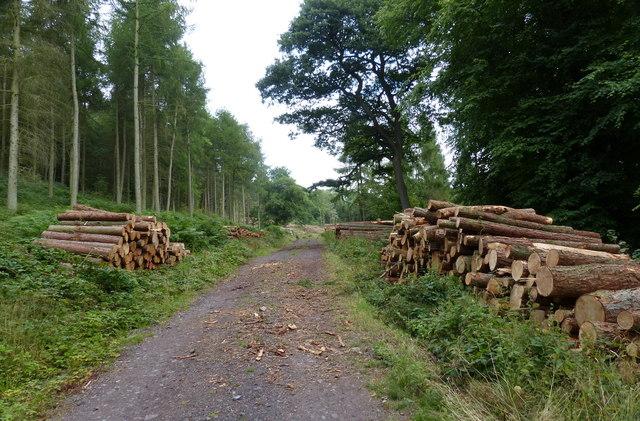 Timber stacks at the Lane Plantation