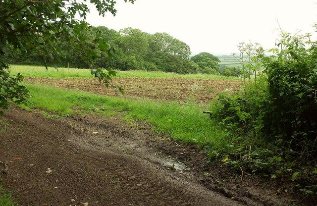 Field beside Wood Lane
