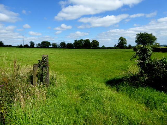 An open field, Knockonny