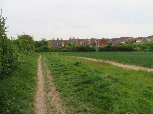 Houses in Firecrest Road