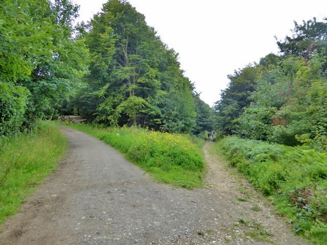 Tracks, Friston Forest