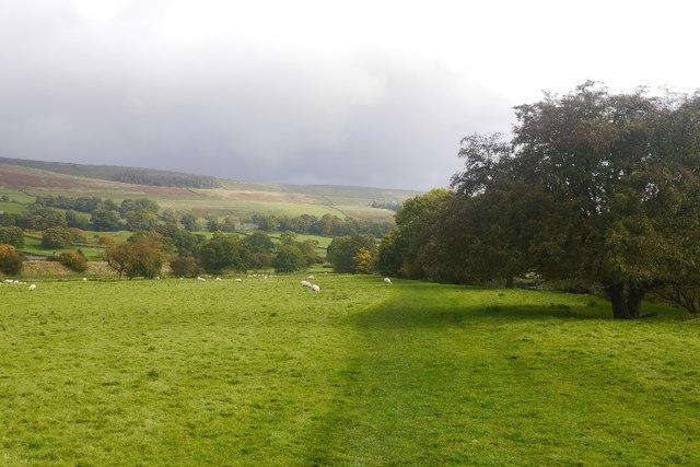 Riverside path, Wensleydale
