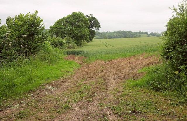 Field by Kingsdon Wood