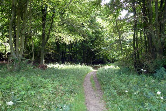 Bridleway, Friston Forest