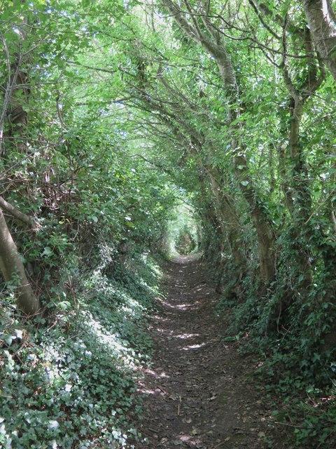 Public path Gatcombe to Chillerton
