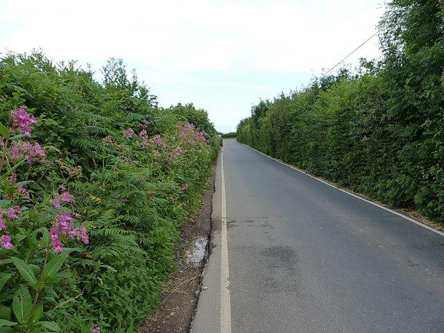 Beechtree Lane heading for Branscombe Cross