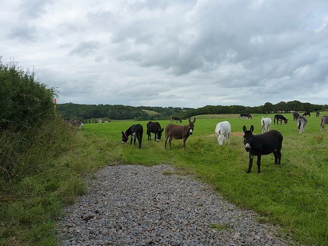 Donkeys on Paccombe Hill