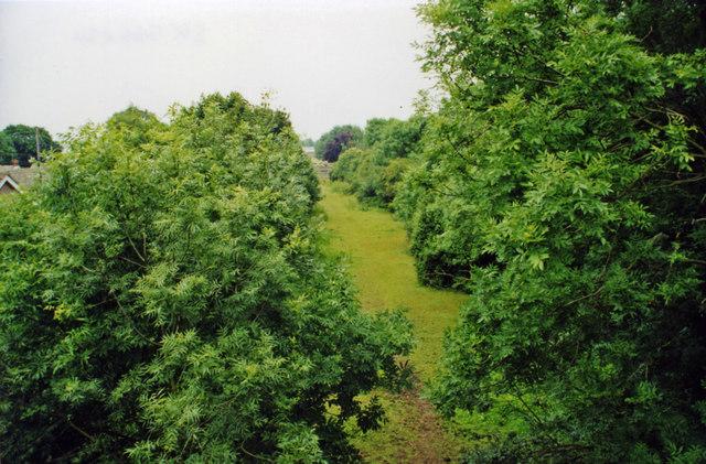 Overgrown course of Grantham - Lincoln railway track, near Leadenham, 2000