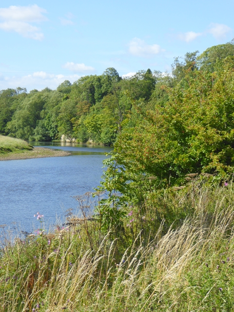 Bend on the River Tees