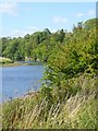 NZ2215 : Bend on the River Tees by Oliver Dixon