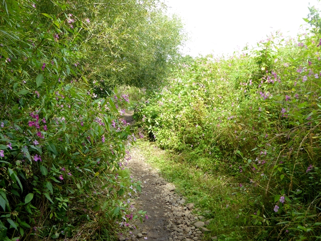 Teesdale Way opposite Manfield Scar
