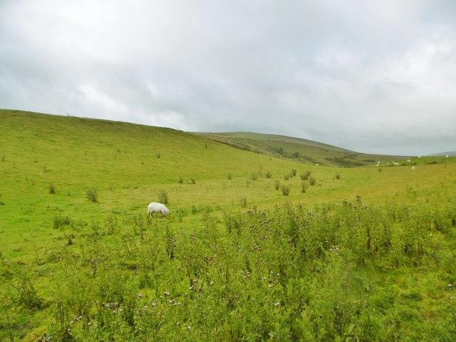 Llanarmon Dyffryn Ceiriog, sheep grazing