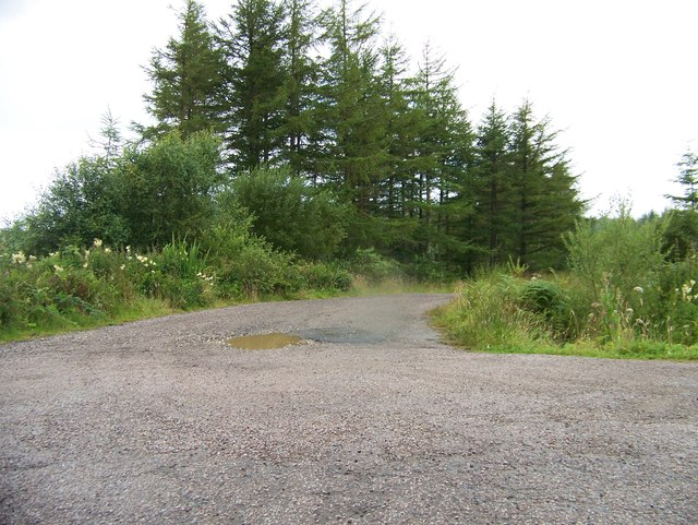 Forest road off the B8001