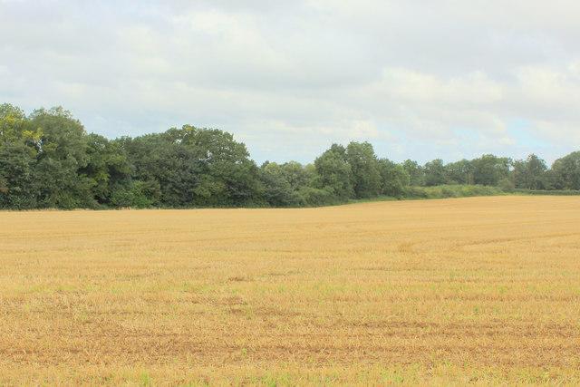 View towards Kirkham Park Wood