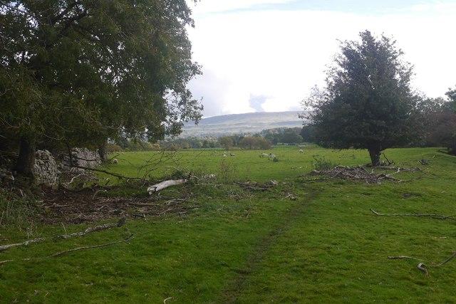 Flood debris, Wensleydale