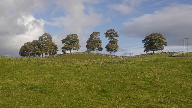 Limestone pasture