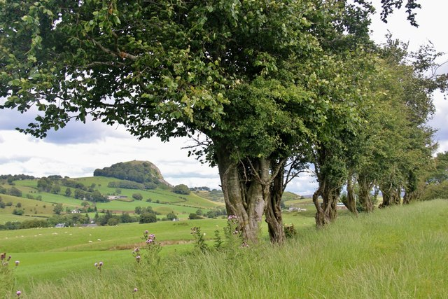 Trackside hedge near Laigh Newton