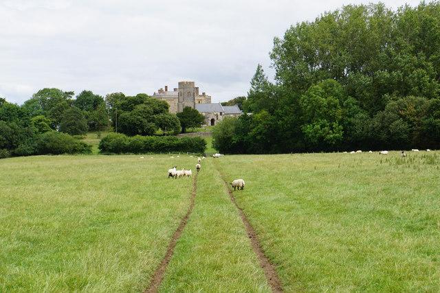 Sheep near East Quantoxhead