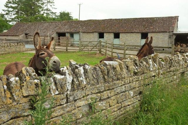 Donkeys, Charlton Mackrell