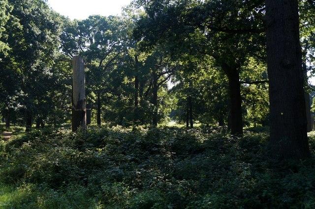 Woodland near the Queen's Road entrance, Richmond Park