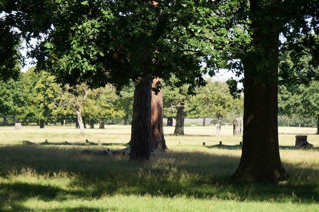 Richmond Park near the Ladderstile Gate