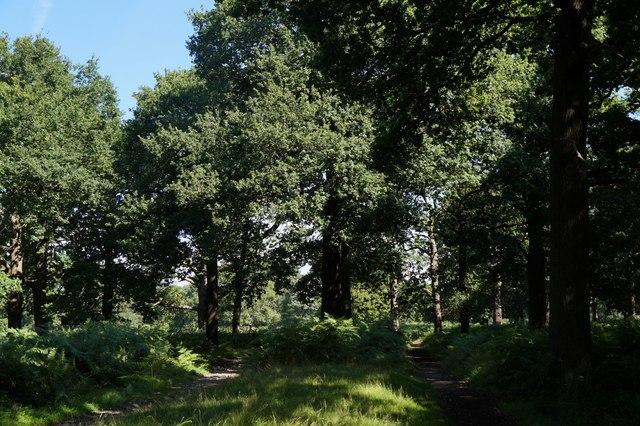Path near the Ladderstile Gate, Richmond Park