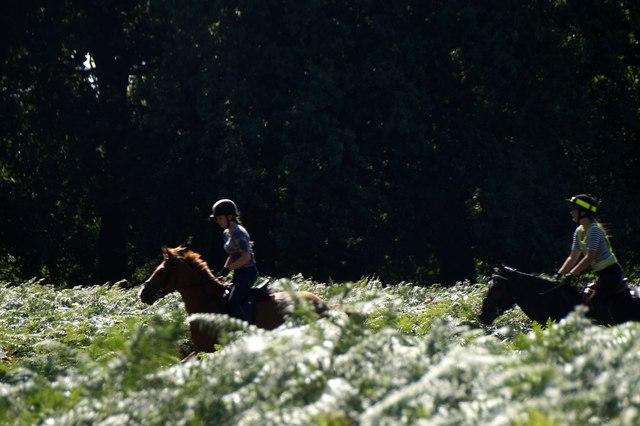 Horseriders in Richmond Park