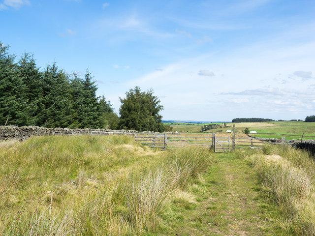 Bridleway reaching gate at Burntridge Plantation.