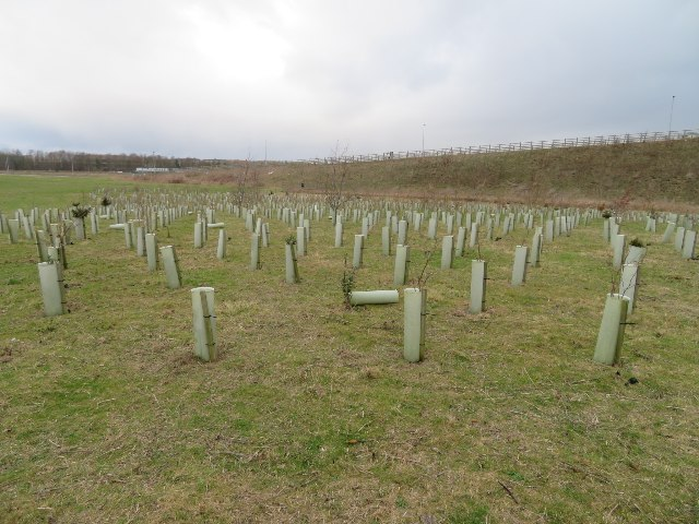 New trees by the guided busway