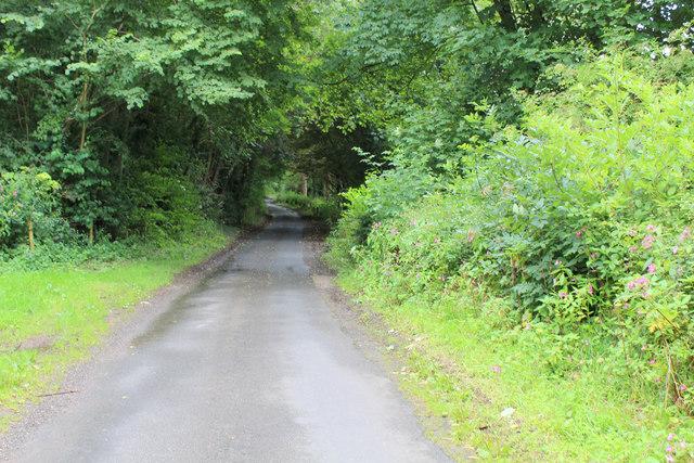 Narrow Lane entering Laysike Wood